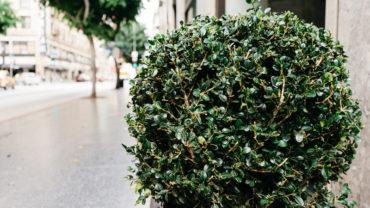 bush-shrub-sidewalk